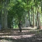 Limbunan de Gutierrez Mangansakan (2010)